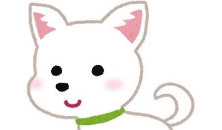 子犬のチワワ