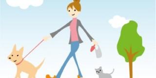 天気のよい日の犬の散歩